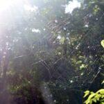 昆虫ではない虫は? クモ、ムカデ、ダニなど